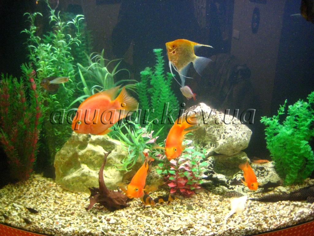 продажа аквариумов в киеве