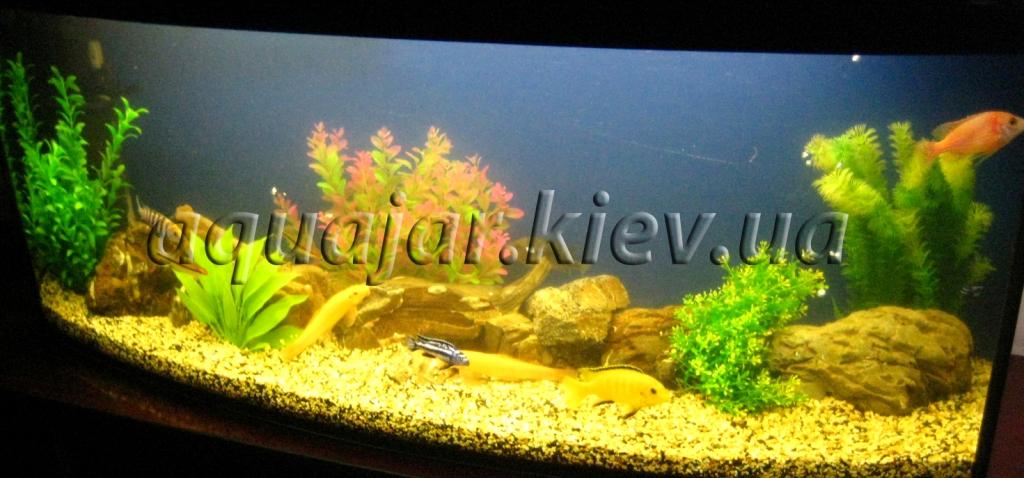производство аквариумов под заказ